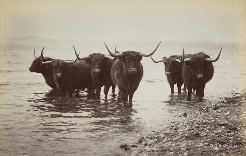 Album de Photographies d'Écosse : La Collection MacKinnon