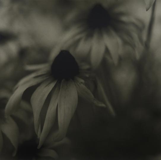 Exposition photo Sylvie Valem, Lambeaux de passage à L'Atelier L'œil Vert