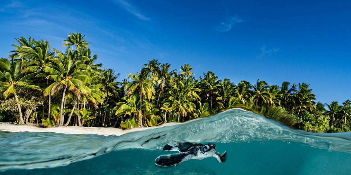 Alexis Rosenfeld : Coral Reefs – Heart of the Ocean