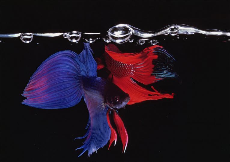 Hiro : Fish and Fowl