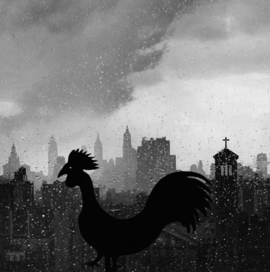 Rooster, 1952 © The Estate of André Kertész / courtesy Stephen Bulger Gallery
