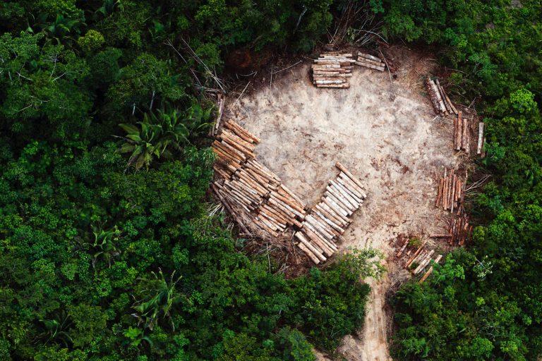 Daniel Beltrá : The Amazon
