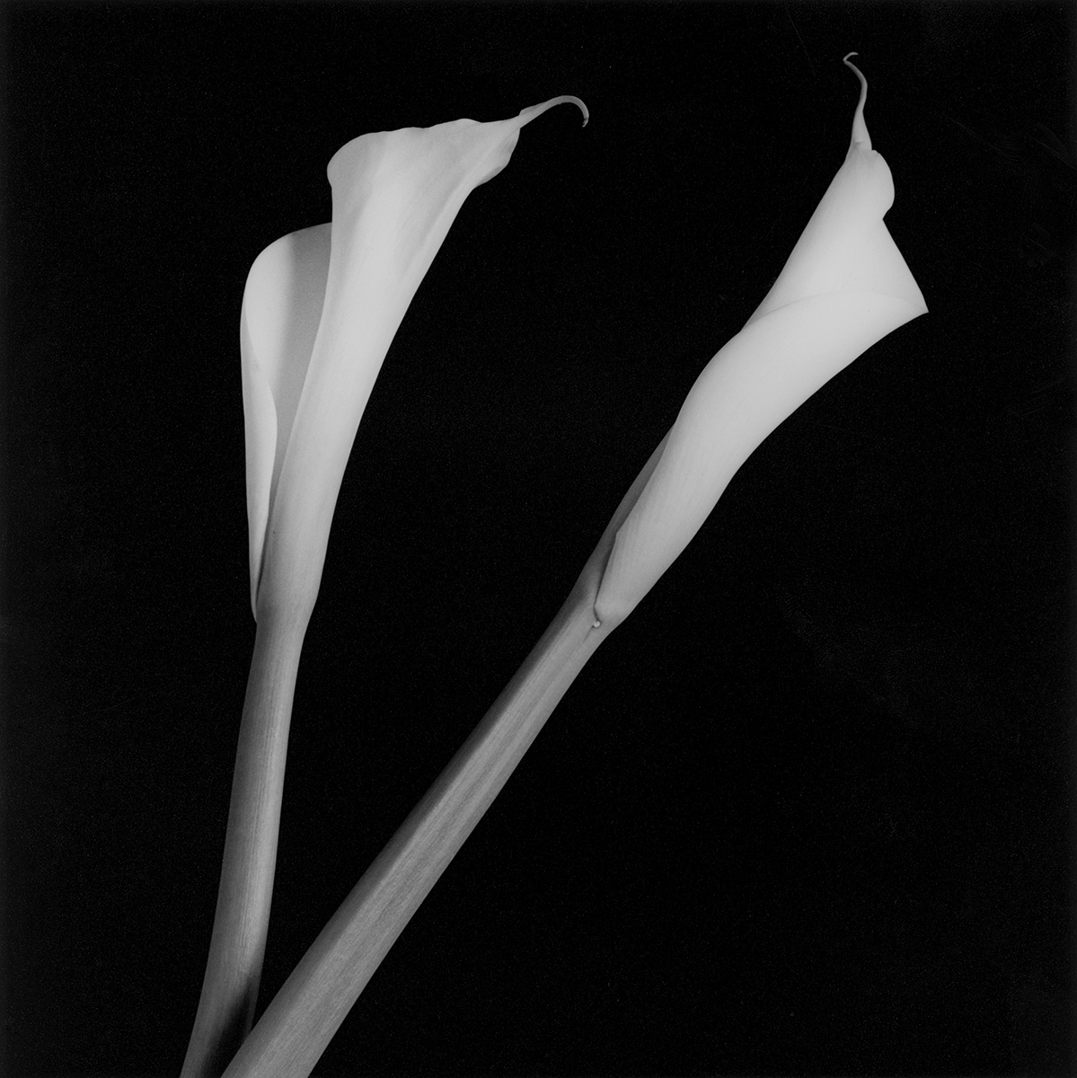 Robert Mapplethorpe : XYZ Portfolios and a selection by