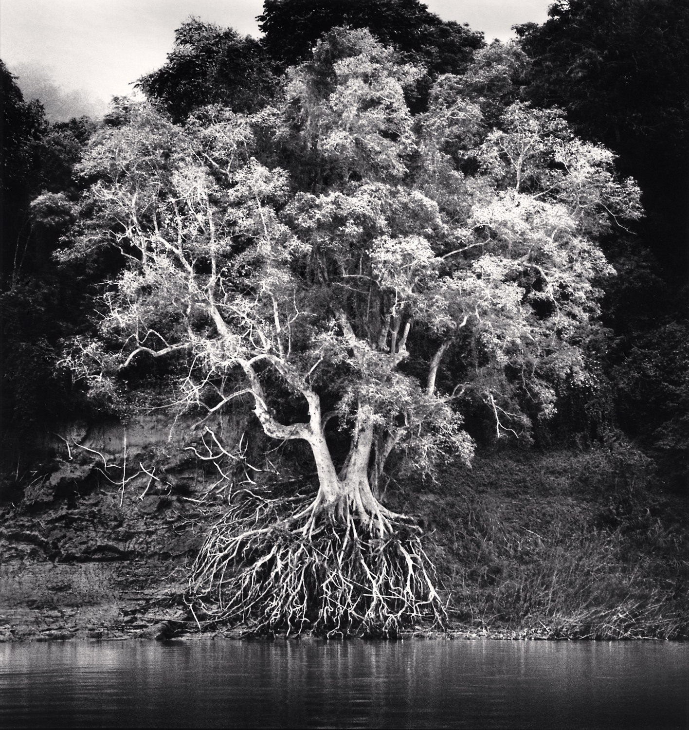 Michael Kenna, Kokdua Tree and Exposed Roots, Mekong River, Luang Prabang, Laos, 2015, courtesy Ira Stehmann Fine Art