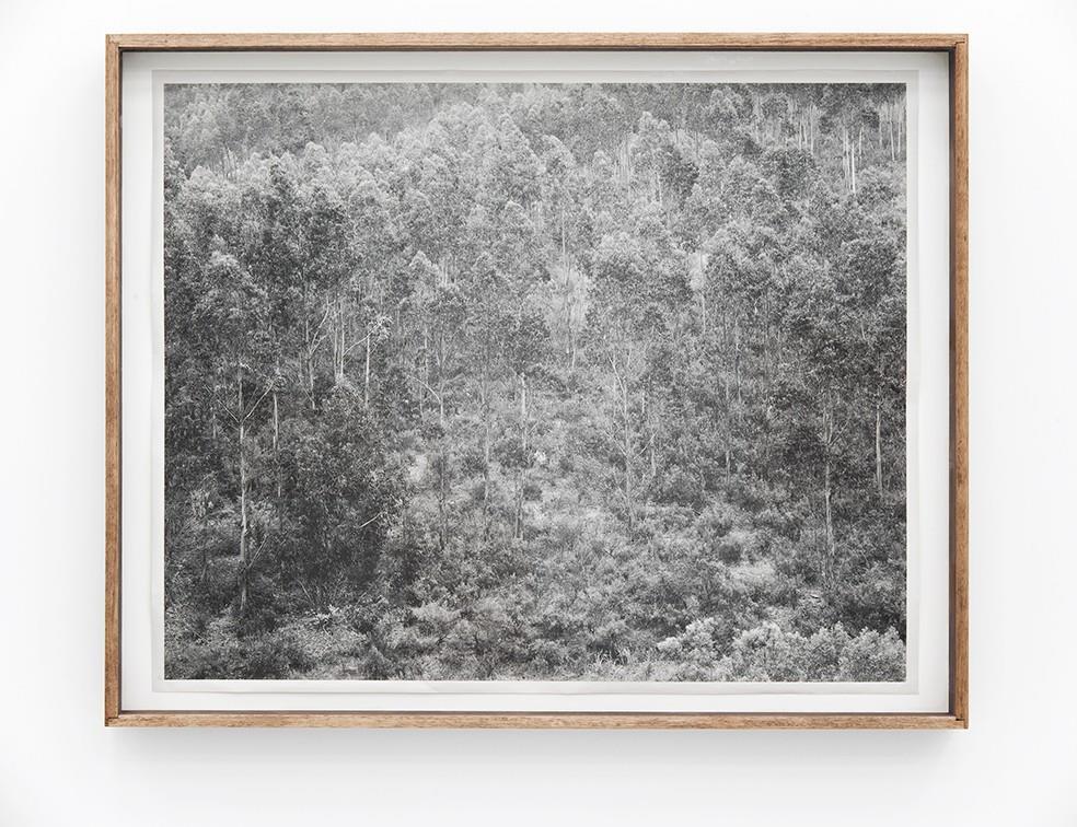 Florence & Damien Bachelot Collection Print Award