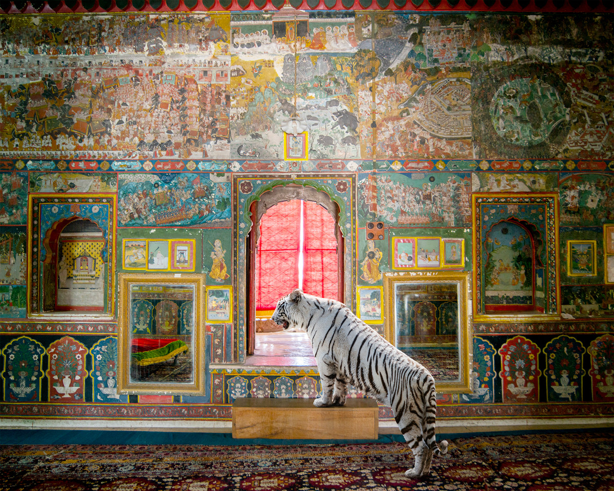 Danziger Gallery : Karen Knorr's Animals, 2020 - 2021 - The Eye of Photography Magazine
