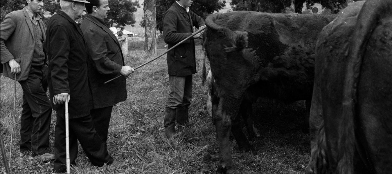 Denis Barrau's Year of the Cow by Jean Loh